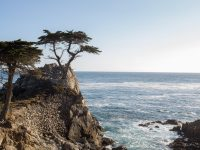 Captured on March 30,  2014, in 17 MILE DRIVE, USA. Photo: Andrew Gosine